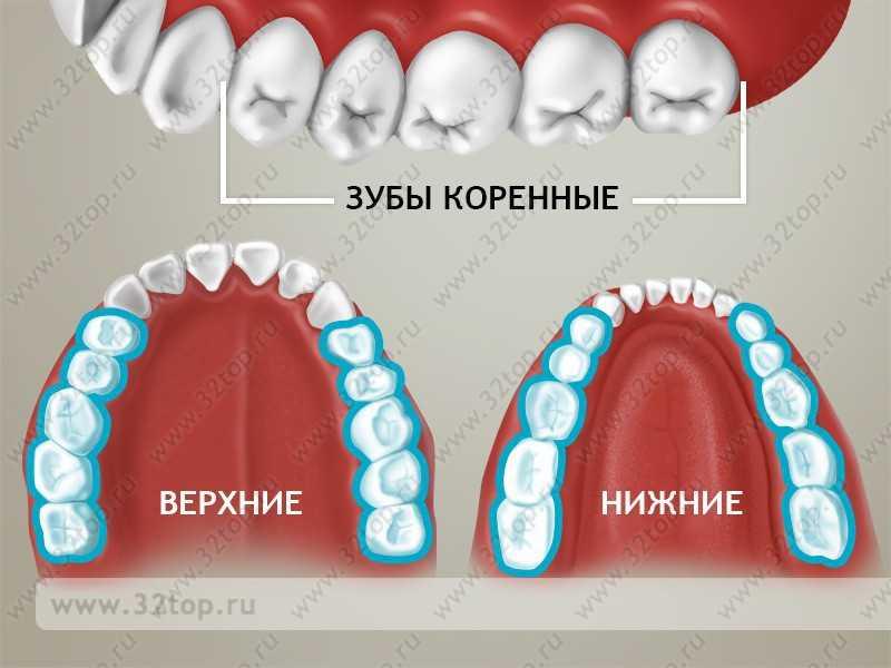 Пятерка это коренной зуб